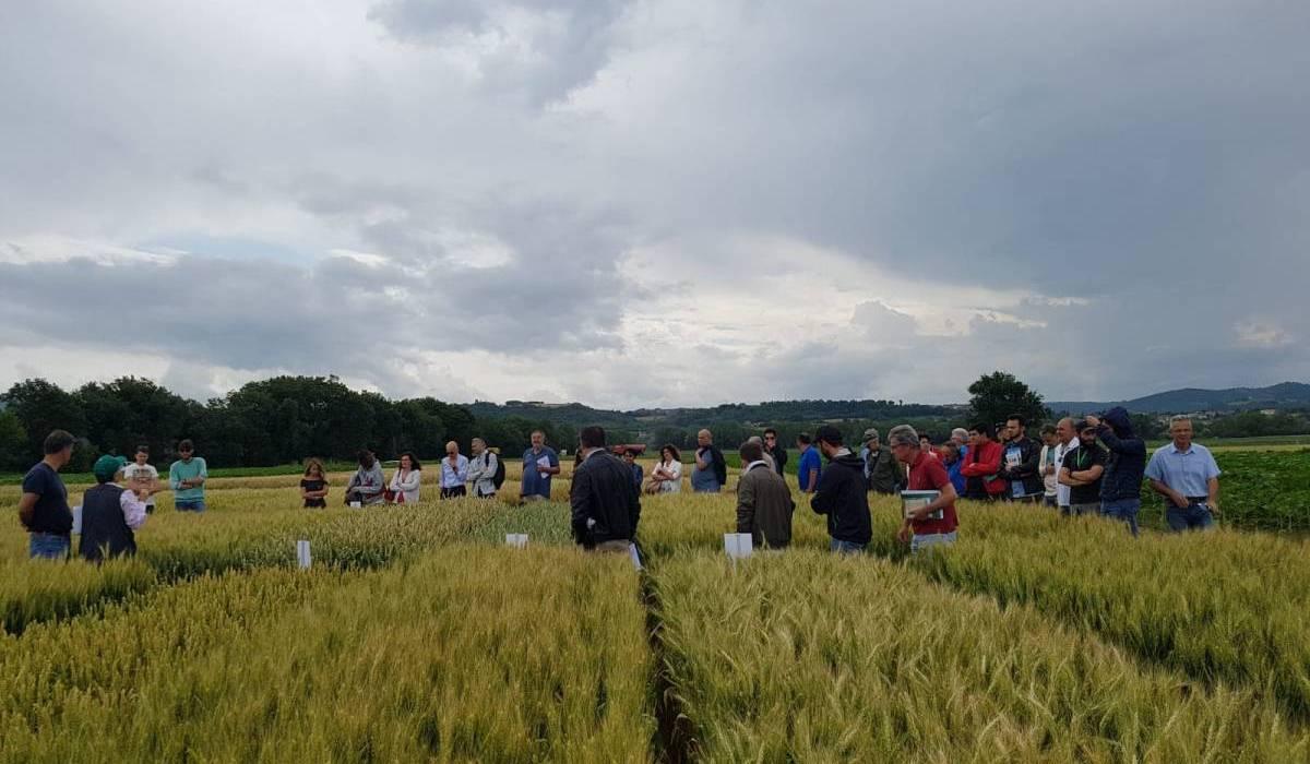 Giornata di campo del progetto Fruqual 2.0 a Papiano